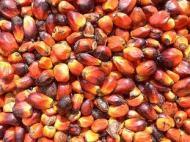 palmnut